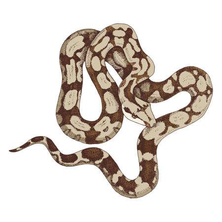 Hand drawn boa constrictor