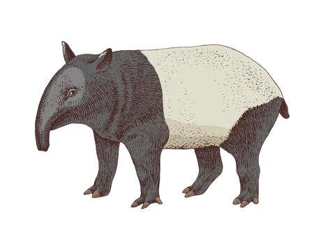 Hand drawn colorful tapir