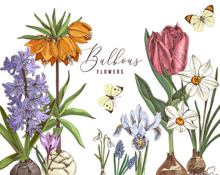 Hand drawn bulbous flowers in vintage style Vetores