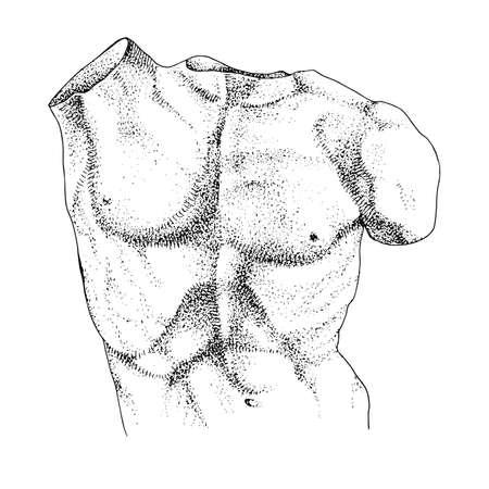 Laocoon torso, hand drawn illustration