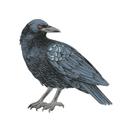 Graphic black crow isolated on white background. Vector Illustration