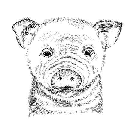 Hand drawn portrait of funny baby pig Stock Illustratie