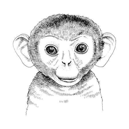 Hand drawn portrait of funny monkey baby Stock Illustratie