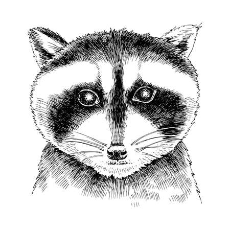 Hand drawn portrait of funny Raccoon baby