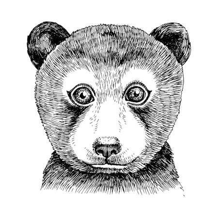 Hand drawn portrait of funny Bear baby