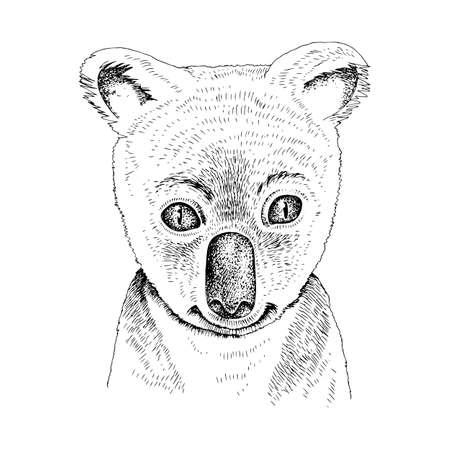 Hand drawn portrait of funny Koala baby
