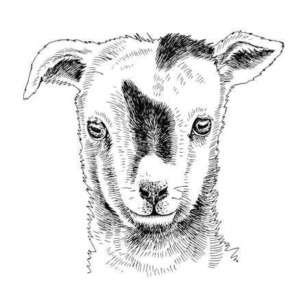 Hand drawn portrait of funny Goat baby Stock Illustratie