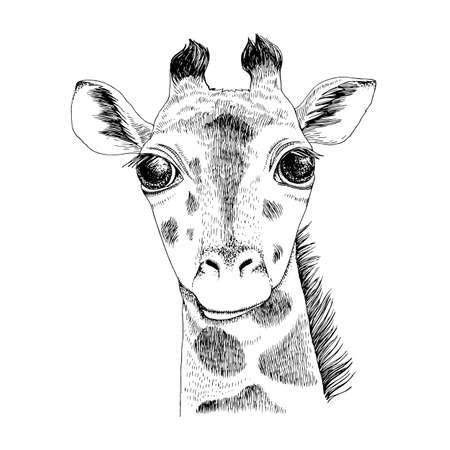 Hand drawn portrait of funny Giraffe baby Stock Illustratie