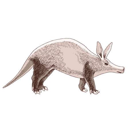 aadvark nocturnal mammal native to Africa Vector Illustration