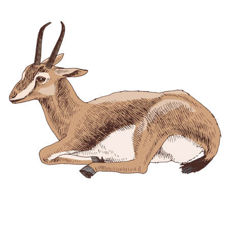 African wild sand gazelle with long horns