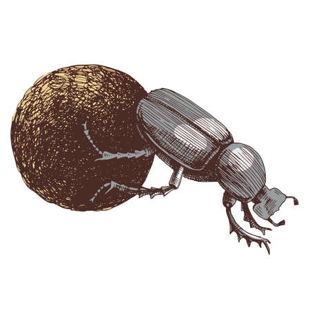 African Dung Beetle rolling ball