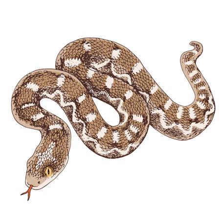 Desert saw scaled Viper snake illustration Stock Illustratie