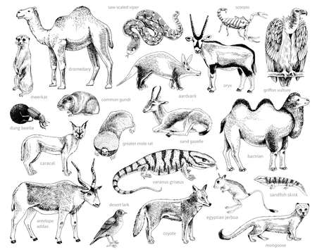 Monochrome Hand drawn collection of desert animals Stock Illustratie
