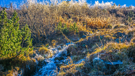 Frozen plants in the mountain at sunrise Stock Photo