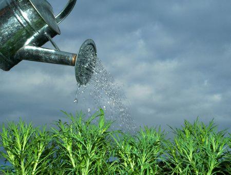 regando plantas: plantas de riego