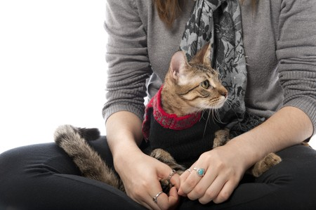 Kitten in a Christmas sweater sitting on an isolated white background Stock Photo