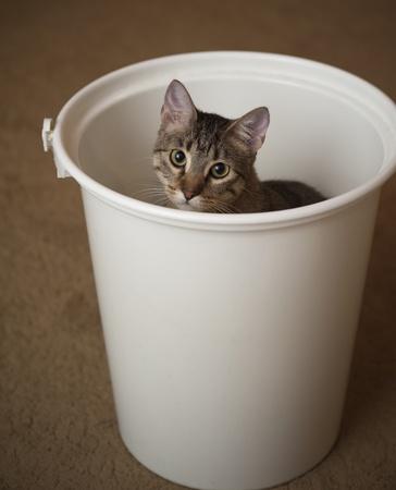 Curious kitten hides in a diaper pail