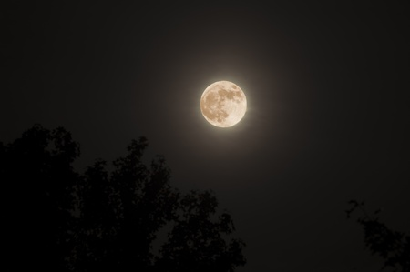 Full supermoon above sihoutted treetops in a dark night sky