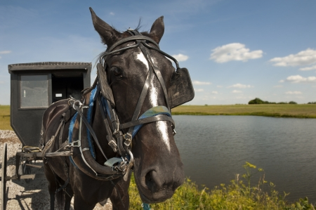 An Amish horse and buggy traveling a gravel road pass by a pond and open field on a sunny day