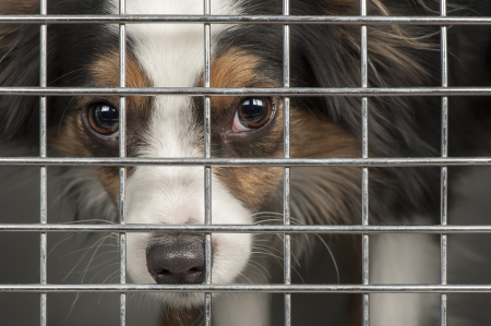 Closeup of a dog looking through the bars of a cage Stock Photo - 17034422