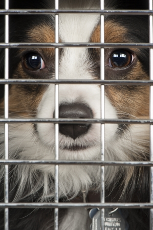 Closeup of a dog looking through the bars of a cage photo