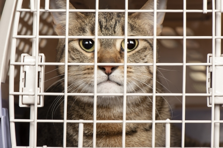 Closeup of a cat looking through the bars of a cage Stock Photo - 17034417