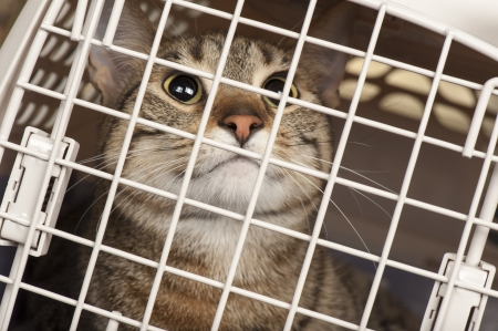 Closeup of a cat looking through the bars of a cage Stock Photo - 17034429