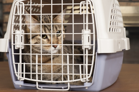 Closeup of a cat looking through the bars of a cage Stock Photo