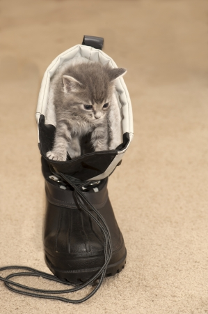 Kitten climbing out of a snow boot Stock Photo - 20017402