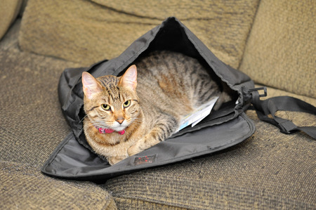 A tabby cat lies proudly inside of a satchel on the couch