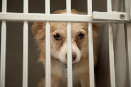 Kleine Chion Hund hinter den Gittern eines Käfigs sitzt Tierheim Standard-Bild - 34234276