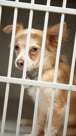 humane: Little Chion dog sits behind the bars of a shelter cage