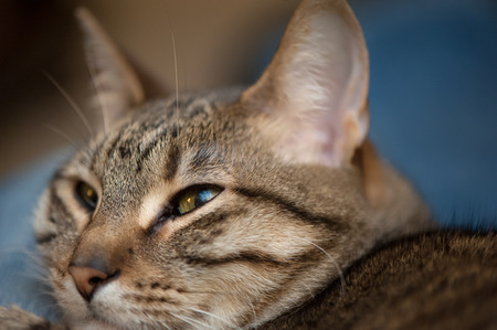 Extreme closeup of a tabby cats face