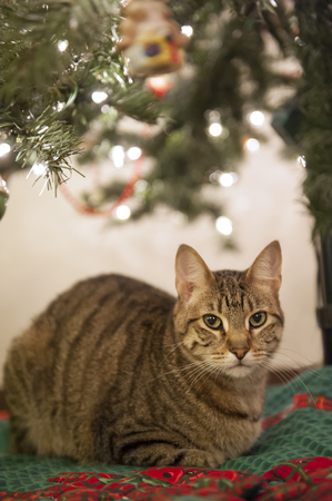 A cat sits attentively under a Christmas tree