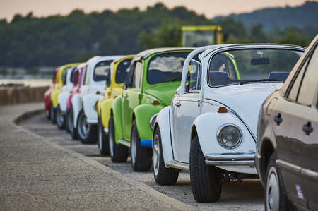 Beetles in a line Editorial