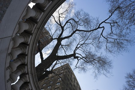 A tree reaches for the sky in New York City Stock Photo