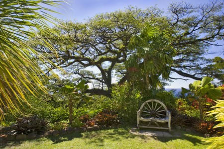 A wooden chair sits under a spreading tree in a lush garden under a blue sky