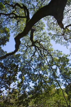 A rain forest tree reaches into a blue sky