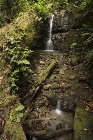 A fallen tree leads up to a softly flowing waterfall amidst a lush rainforest