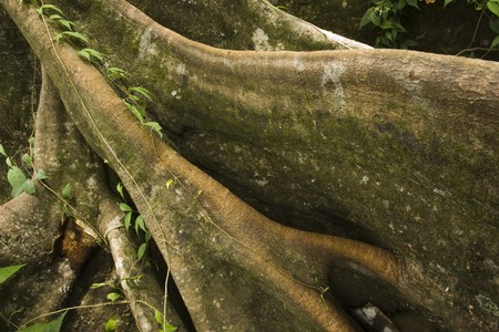Roots spreading out into the frame covered in moss and plants