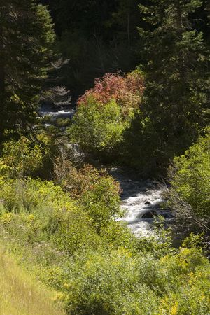 A river flows, with fall colored banks, through mountain forest.