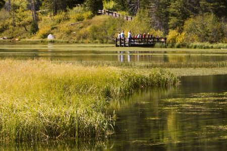 Kids and teachers stand on wooden dock looking into a lake surrounded by autumn colors. Stock Photo