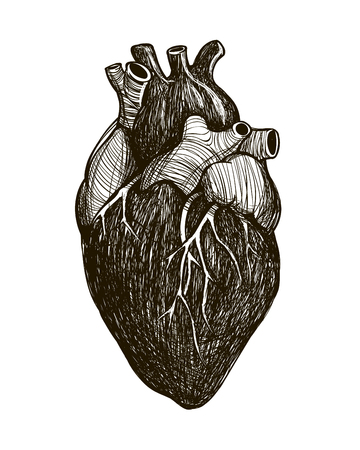 Human anatomical heart isolated on white background. Vintage hand drawn vector illustration. Vettoriali