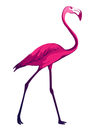 Flamingo, tropical vector illustration isolated on white background.