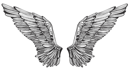 Wings feather. Vintage hand drawn vector illustration.