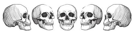 두개골과 Flowers.Tattoo 예술, 흰색 배경에 고립 착색 books.vintage 그림입니다. 스톡 콘텐츠 - 54122717