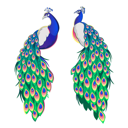 Set of two peacocks isolated on white background. Vector illustration.
