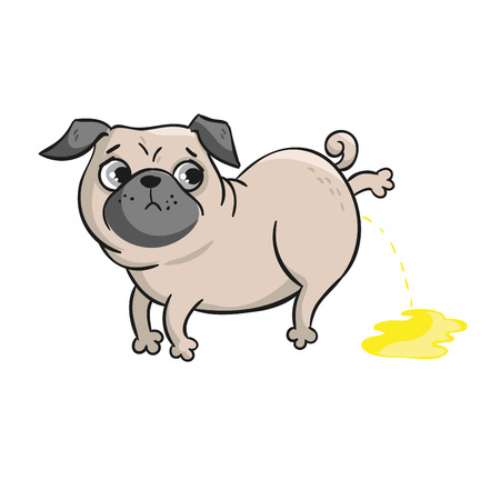 postcard background: Cute pug. Vector hand drawn cartoon illustration isolated on white background. Illustration