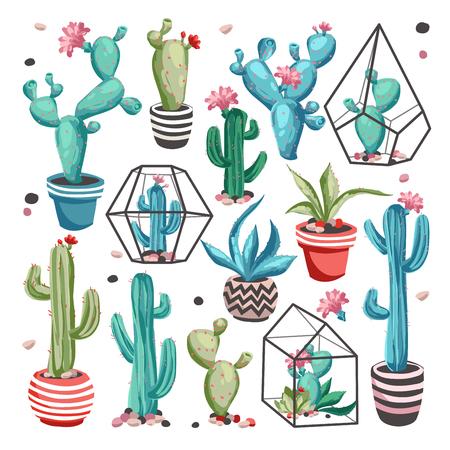 Cacti flower set. Vector Illustration