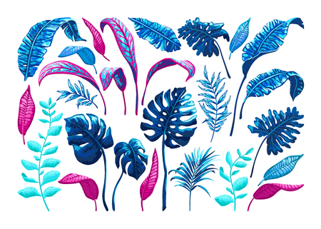 Tropical palm leaves. Vector illustration.